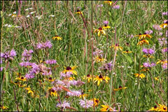 PodTech Weekly: Prairie Grass to the (Energy) Rescue